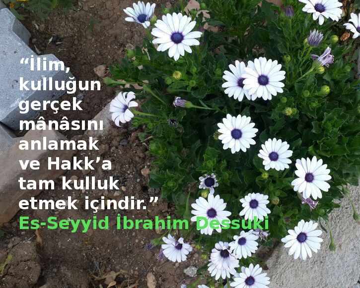Es-Seyyid İbrahim Dessuki Hz.